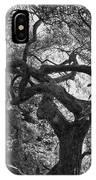 Tree In Prescott Park - Bw IPhone Case