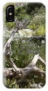 Tree Trunk In The Meadow IPhone Case