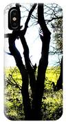 Trees In The Forest IPhone Case