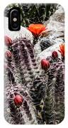 Trichocereus Cactus Flowers IPhone Case