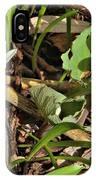 Trio Of Bloodroot Flowers IPhone Case