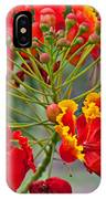 Tropical Flower Caesalpinia Red And Yellow IPhone Case