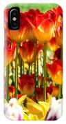 Tulip Stand In Mount Vernon Washington IPhone Case
