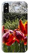 Tulips At Dallas Arboretum V41 IPhone Case