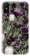 Tulips At Dallas Arboretum V43 IPhone Case