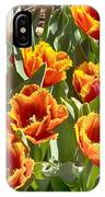 Tulips At Dallas Arboretum V71 IPhone Case