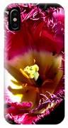 Tulips At Dallas Arboretum V77 IPhone Case