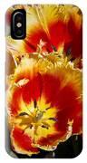 Tulips At Dallas Arboretum V84 IPhone Case
