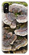Turkey Tail Bracket Fungi -  Trametes Versicolor IPhone Case