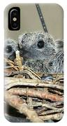 Two Baby Mourning Doves IPhone Case