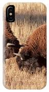 Two Bull Bison Facing Off In Yellowstone National Park IPhone Case