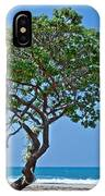 Two Heliotrope Trees On Tropical Beach Art Prints IPhone Case