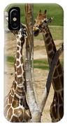 Two Reticulated Giraffes - Giraffa Camelopardalis IPhone Case