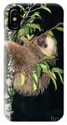 Two-toed Sloth Choloepus Didactylus IPhone Case