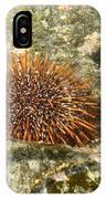 Underwater Shot Of Sea Urchin On Submerged Rocks IPhone Case
