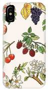 Unidentified Montage Of Fruit IPhone Case