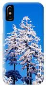 Usa, Oregon, Pine Trees, Winter IPhone Case