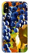 Vineyard 2 IPhone Case