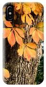 Virginia Creeper Autumn Color IPhone Case