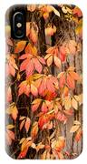 Vitaceae Family Ivy Wall Abstract IPhone Case