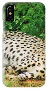 Waiting For Baby Cheetahs IPhone Case