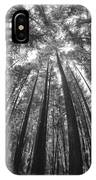 Walk In The Redwoods 6 IPhone Case