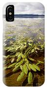 Water Plant IPhone Case