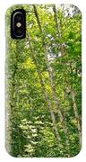 White Birch Along Rivier Du Nord Trail In The Laurentians-qc IPhone Case