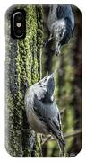 White Breasted Nuthatchs IPhone Case