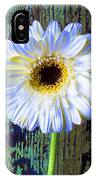 White Daisy With Green Wall IPhone Case