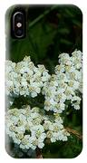 White Flowers In Green Field IPhone Case