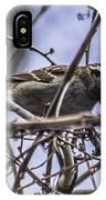 White-throated Sparrow With Berry IPhone Case