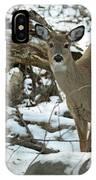 Whitetail Deer Doe In Snow IPhone Case