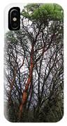 Winters Trees  IPhone Case