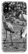 Wood Storks In Black And White IPhone Case