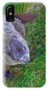 Woodchuck In Salmonier Nature Park-nl IPhone Case
