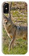 Woodland Coyote IPhone Case