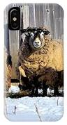 Wooly Sheep In Winter IPhone Case