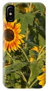 Yellow And Orange Sunflowers IPhone Case