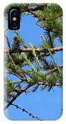 Yellow Bird In A Juniper Tree IPhone Case