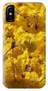 Yellow Blossoms Of A Tabebuia Tree IPhone Case