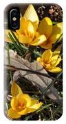 Yellow Crocuses IPhone Case