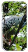 Yellow Crowned Night Heron In Display IPhone Case
