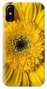 Yellow Daisy Close Up IPhone Case