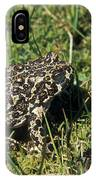 Yosemite Toad Bufo Canorus IPhone Case