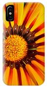 You Are My Sunshine IPhone Case