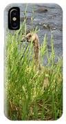 Young Grazing Goose IPhone Case