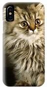 Startled Persian Kitten IPhone Case