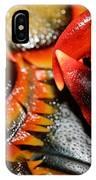 American Lobsters IPhone Case