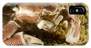 Anemone Or Porcelain Crab In Its Host IPhone Case